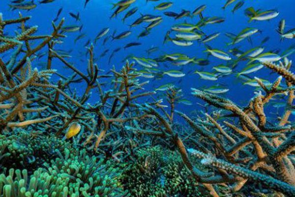 Récif corallien au large de Mayotte.