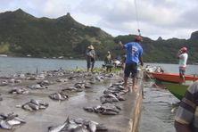 A Rapa le « rahui » gère depuis toujours la ressource maritime