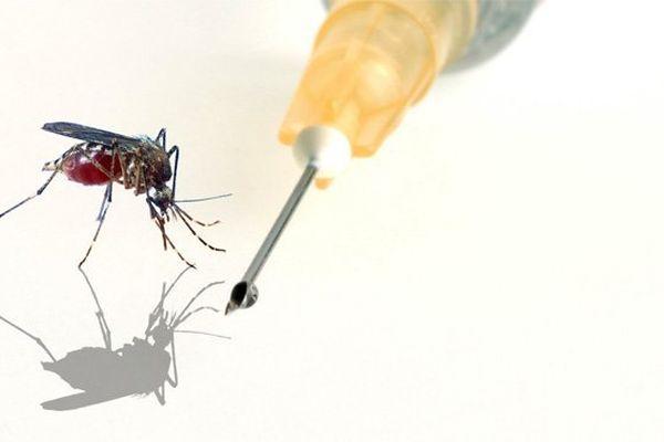 Chikungunya : bientôt des vaccins testés chez l'homme ?
