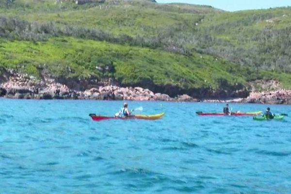 sortie kayak de mer