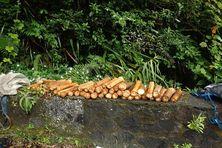 Choux de palmistes saisis en juin 2020