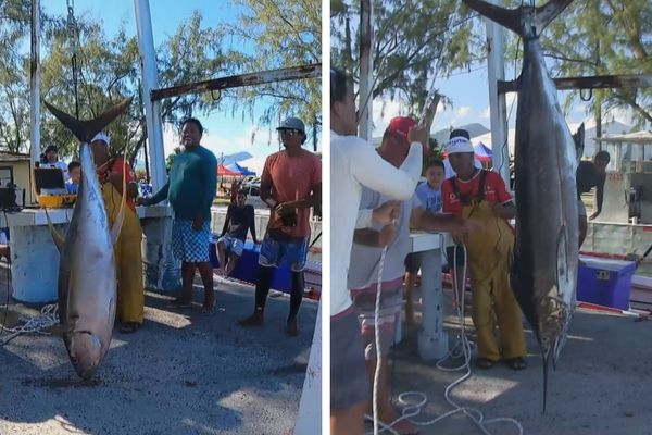 Pêche au gros à Raiatea : le jackpot avec 2 poissons de 66 kg chacun !