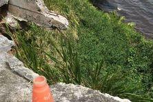 Vue depuis le haut de la falaise de Bovis, à Petit-Bourg