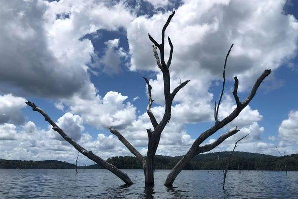 Végétation au lac de Petit-Saut