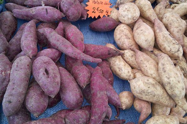 Patates douces de Guyane