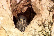 Ce petit Gligli est confortablement installé dans son nid... mais dans l'enceinte d'une école !