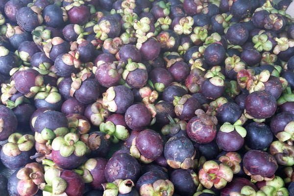 Mangoustans de Guyane