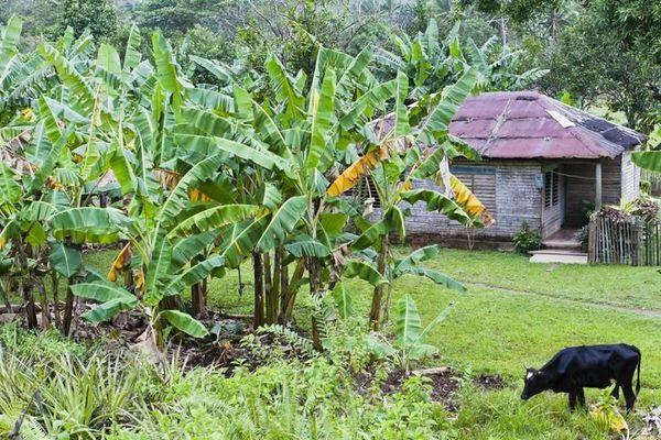 situation des Antilles victimes du chlordécone
