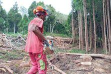 Densifier le tissu économique autour des métiers du bois, c'est l'objectif de la formation de la dizaine de bûcherons dans la forêt de Bélouve. Une première étape d'un plan ambitieux.