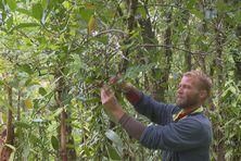 Des visites de la forêt de Bois Blanc pour apprendre à préserver nos espèces.