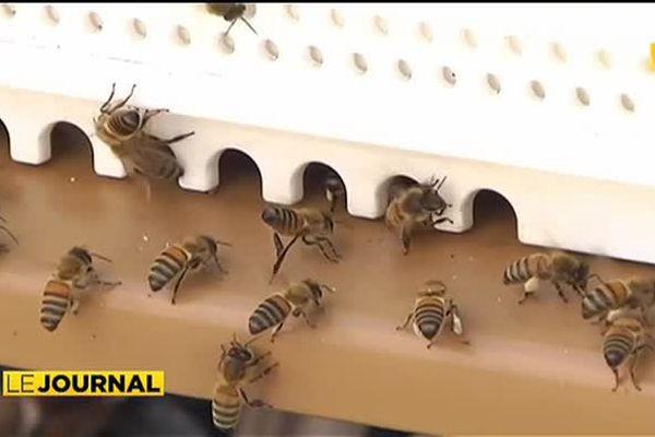 Un groupement privé soutient la production de miel polynésien