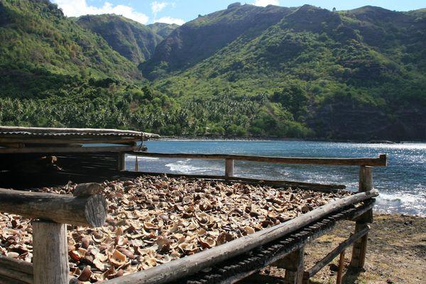 Après la grève à Tahiti, un projet d'huilerie renaît aux Marquises