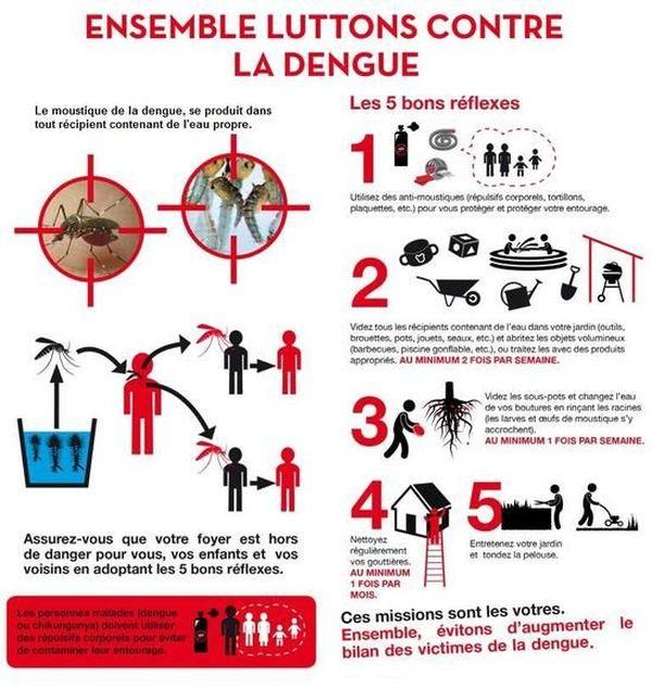 lutte dengue