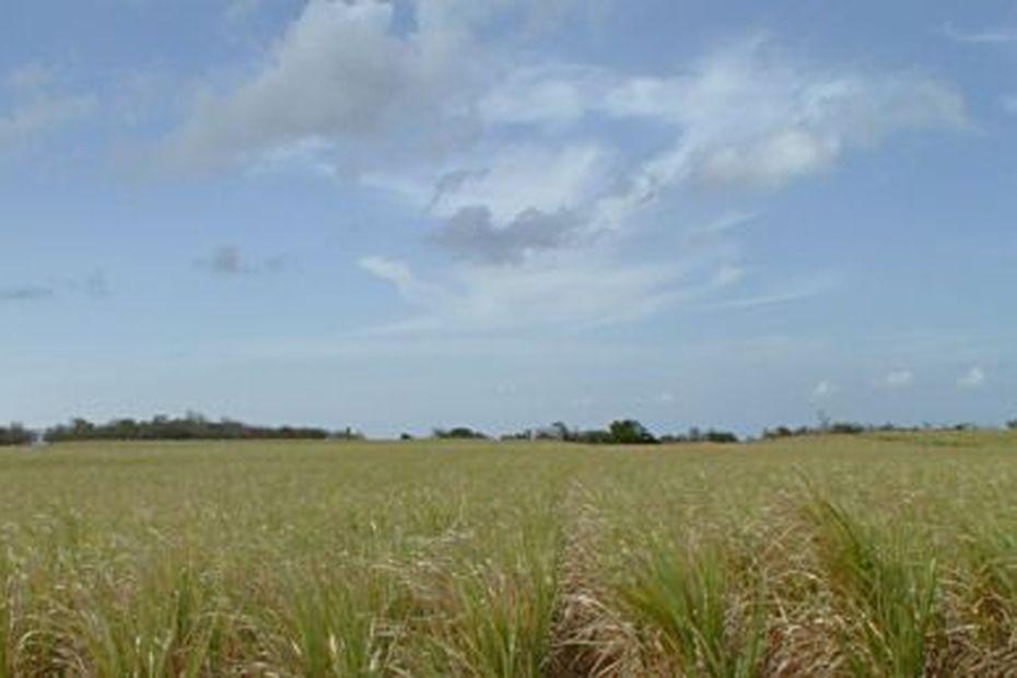 Les planteurs ont jusqu'au 29 février pour se mettre à jour s'ils veulent bénéficier de « l'aide à la garantie de prix » - Guadeloupe la 1ère