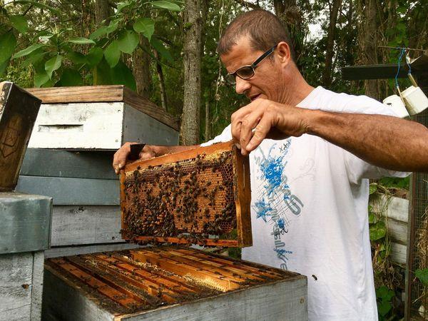 Pascal Fontaine, apiculteur bio