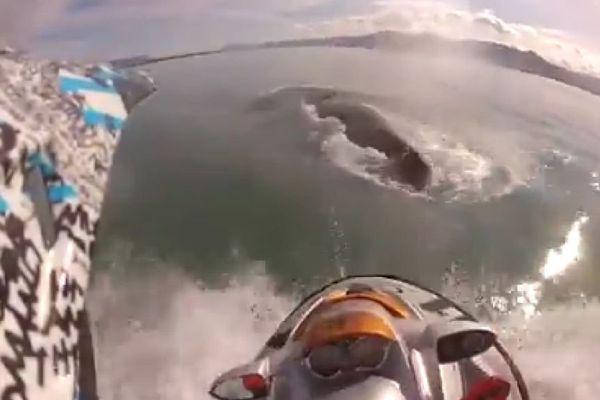 Baleine percutée Islande