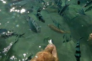 Service de rencontre d étang de poisson