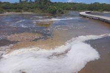 L'étang des salines à Sainte Anne (Martinique).