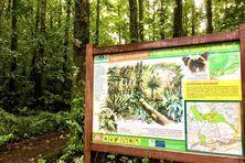 """La qualité de la biodiversité réunionnaise et sa sauvegarde pour les générations futures ont été plébiscitées sur la scène internationale avec l'inscription du massif volcanique sur la """"Green List"""" de l'UICN."""
