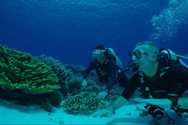 Au-delà des récifs coralliens, la vie 2