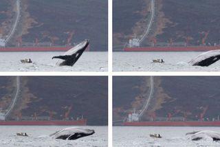 La baleine et la plate, Prony, 1er août 2019
