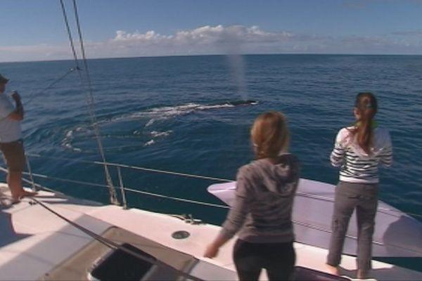 Capture feuilleton de la semaine Au rythme des baleines août 2017