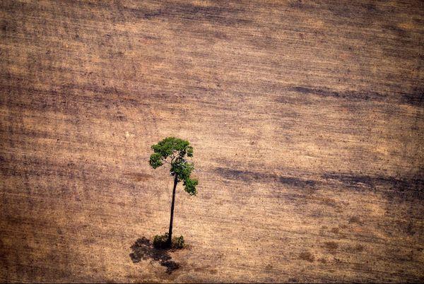 Deforestation Brésil