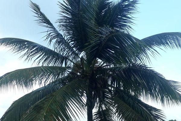 Ciel clément - cocotier