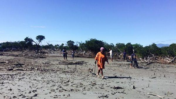 Pouébo : reboisement de la mangrove, juin 2019