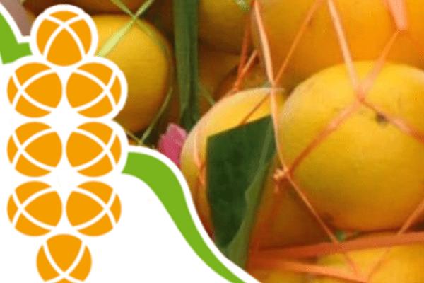 La Fête de l'orange sous pression