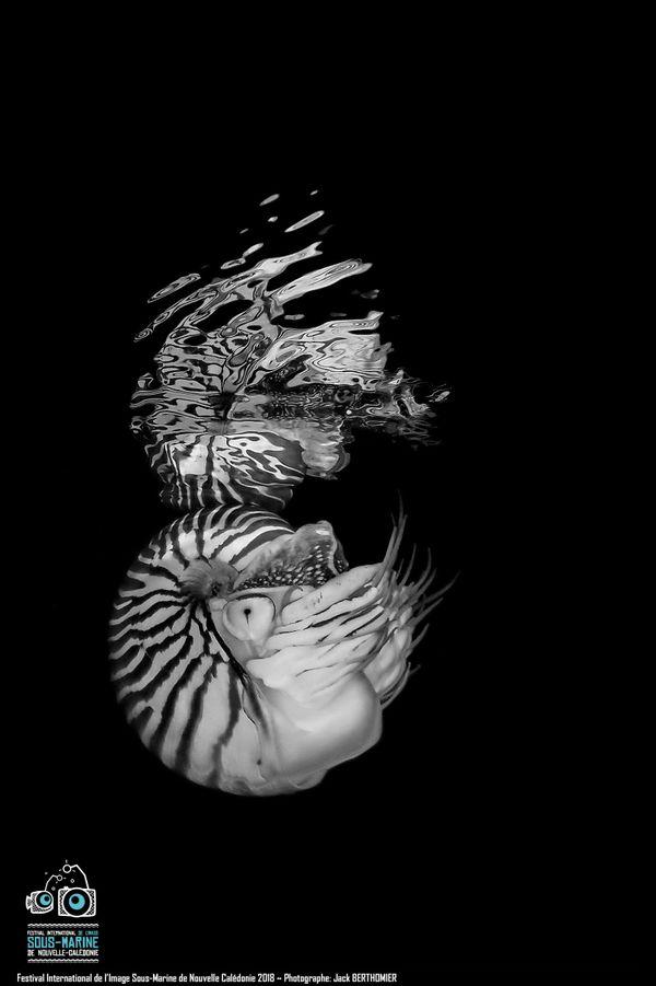 Festival de l'image sous-marine 2018, médaille de bronze en catégorie photo noir et blanc