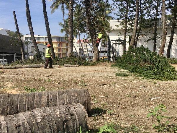 Abattage arbres musée NC