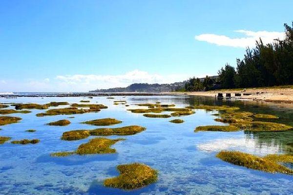 Lagon de l'Hermitage à marée très basse
