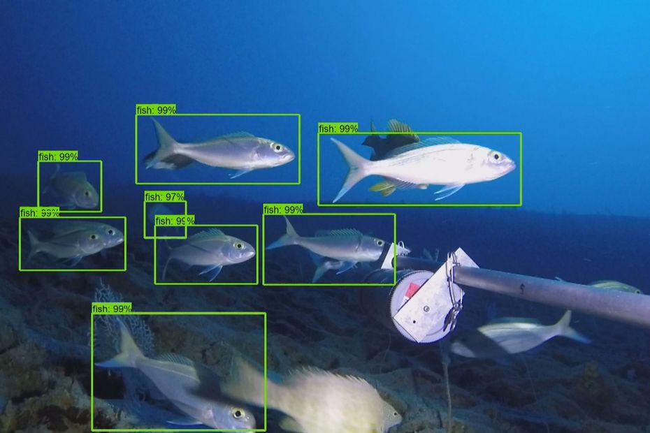 Compter et recenser les poissons du lagon grâce à l'intelligence artificielle. C'est le défi que tentent de relever des chercheurs calédoniens qui ont mis au point de nouveaux algorithmes.