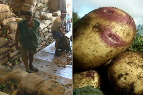 coraph et pommes de terre