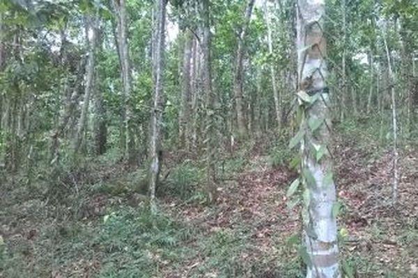 agroforesterie en Guadeloupe