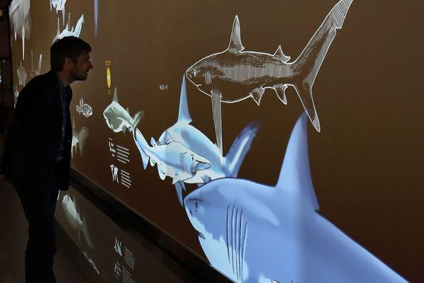 Fresque interactive au Musée océanographique de Monaco