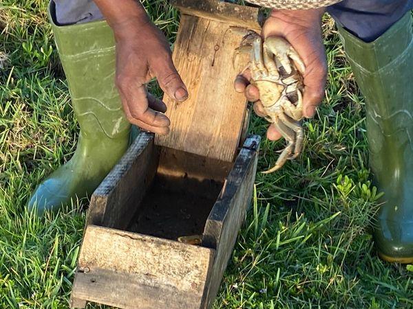Crabe et piège boîte à crabe