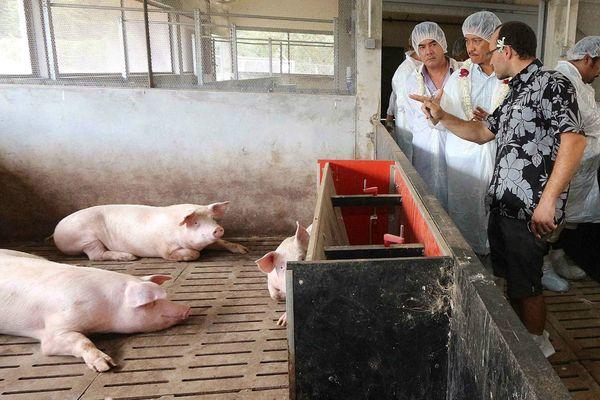 La station porcine de Moorea inaugurée