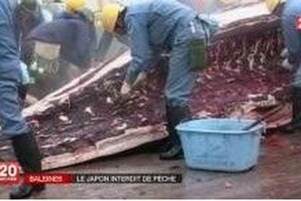 La chasse à la baleine se poursuit au Japon