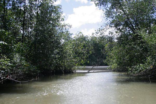 Rivière de Montsinéry
