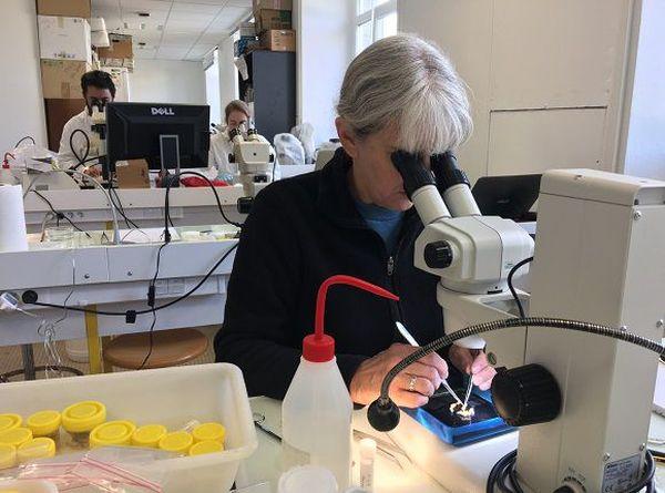 La faune sous-marine de Nouvelle-Calédonie au microscope