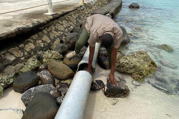 Relevés du SIPS sur la plage de la Caravelle, à Sainte-Anne