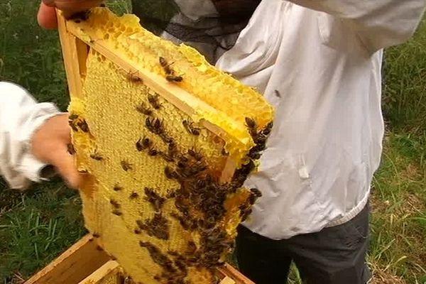Gaufre de miel