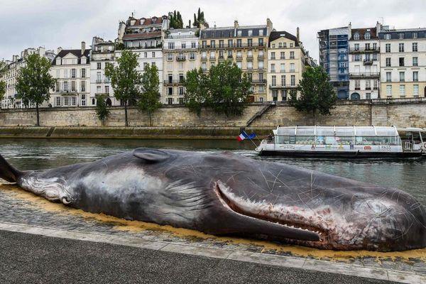 fausse baleine échouée à Paris