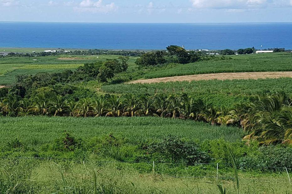 Glyphosate : comment en sortir pour une agriculture plus saine à La Réunion ? - Réunion la 1ère