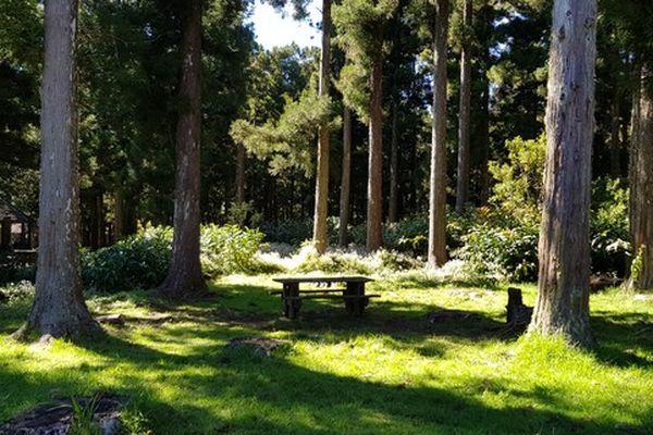 Forêt de Petite Plaine