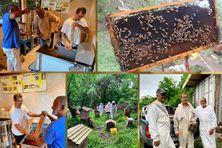 Baptiste Élisabeth, apiculteur de Sainte-Luce, vit une retraite active entre les champs et son atelier à Sainte-Luce (Martinique).