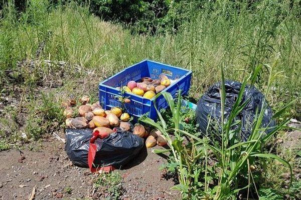 Producteur de mangues aux avirons surproduction solidarité 010119