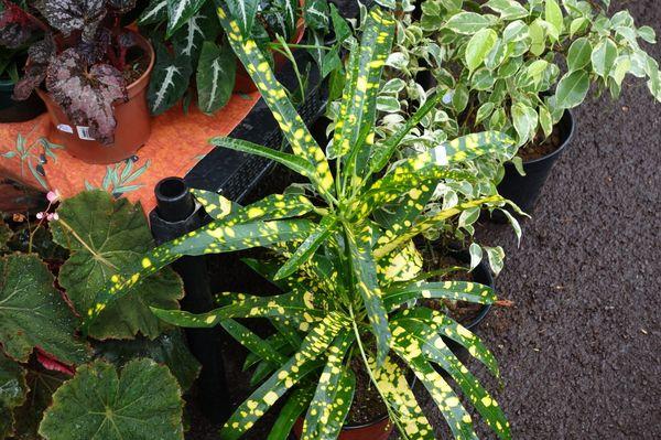 Madiflora 2014